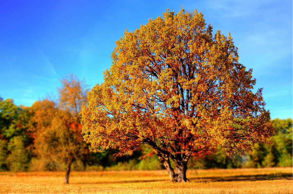 autumn tree in country